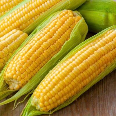Maïs - Golden Bantam