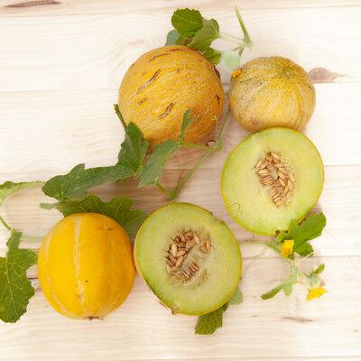 Melons - Farthest North Galia