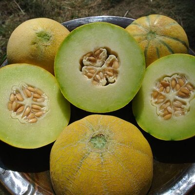 Melons - Farthest North Mix