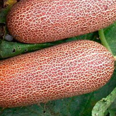 Concombres - Poona Kheera