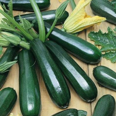 Courgettes - Verte Noire Maraichère