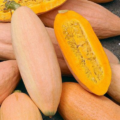 Courges Maxima - Pink Banana Jumbo