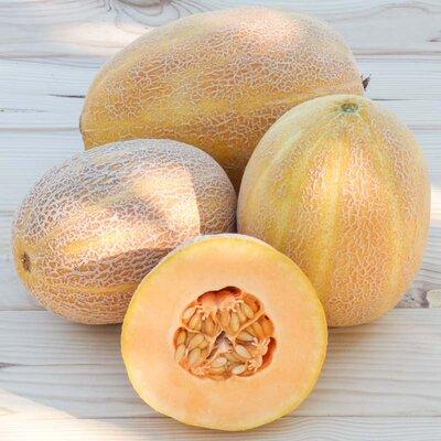 Melons - Sweet Granite