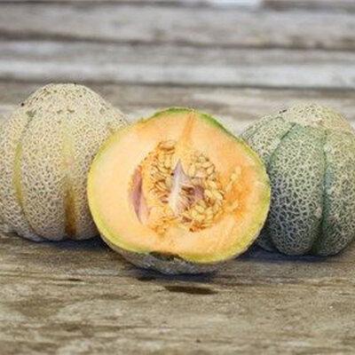 Melons - Golden Jenny