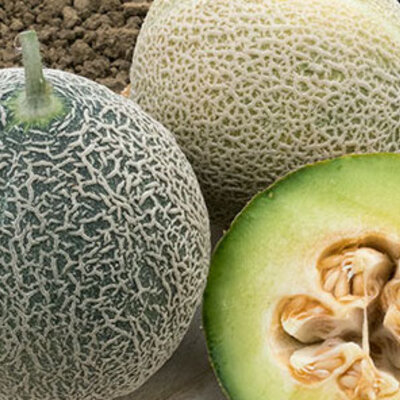 Melons - Green Nutmeg