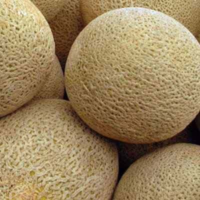 Melons - Honey Rock