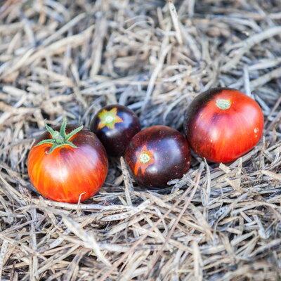 Tomates - Black Shadow