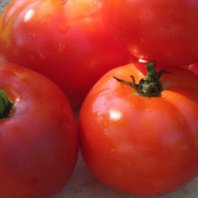 Tomates - Oregon Spring