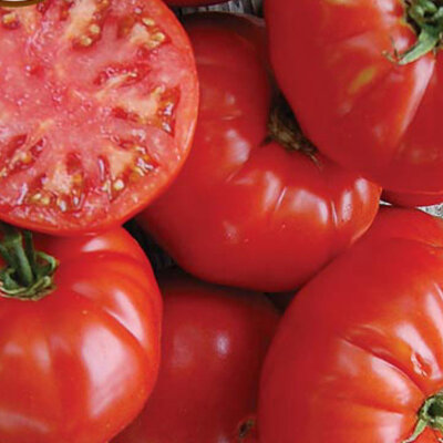 Tomates - Kanner Hoell