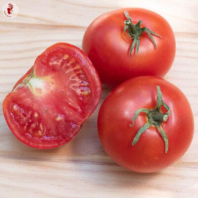 Tomates - Bonny Best