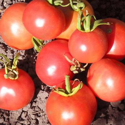 Tomates-Cerises - Pêche Rouge