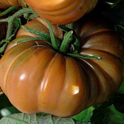 Tomates - Zakopane