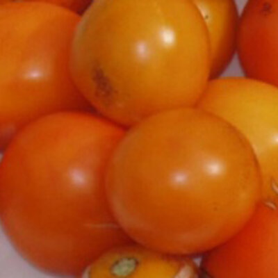 Tomates - Orange Bourgois