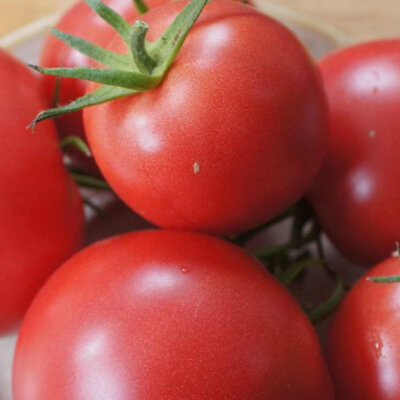Tomates - Purple Perfect