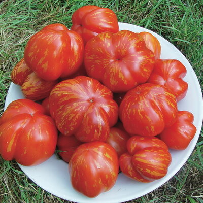 Tomates - Striped Cavern