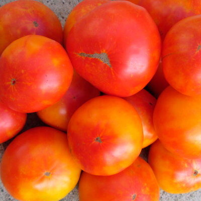 Tomates - Anawine