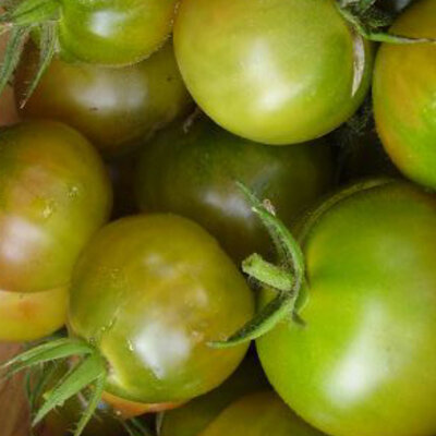 Tomates-Cerises - Aunt Ruby's German Cherry