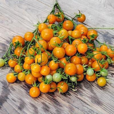 Tomates-Cerises - Orange Centiflor