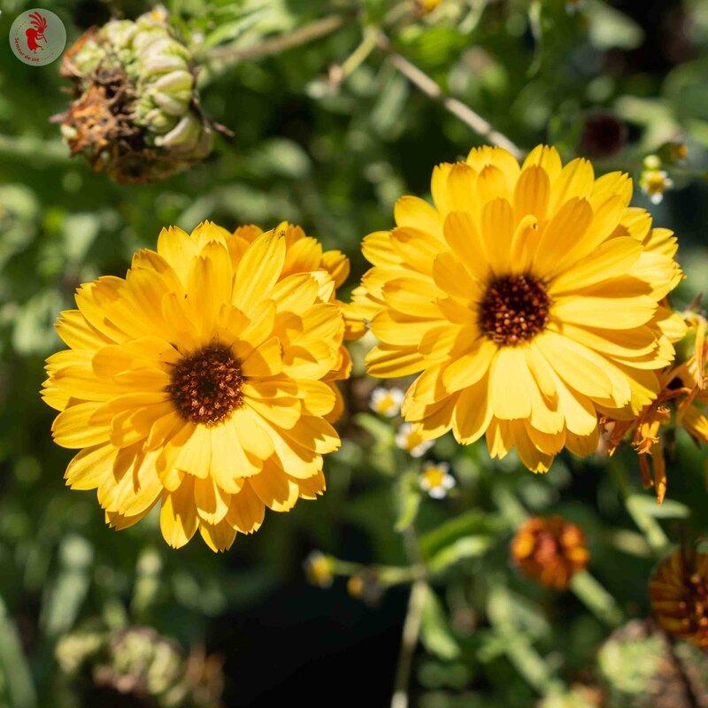 Soucis - Sunshine Flashback