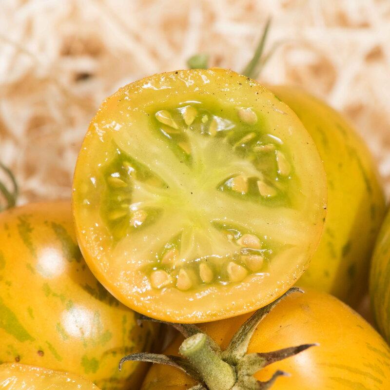 Tomates - Grevys Green Zebra