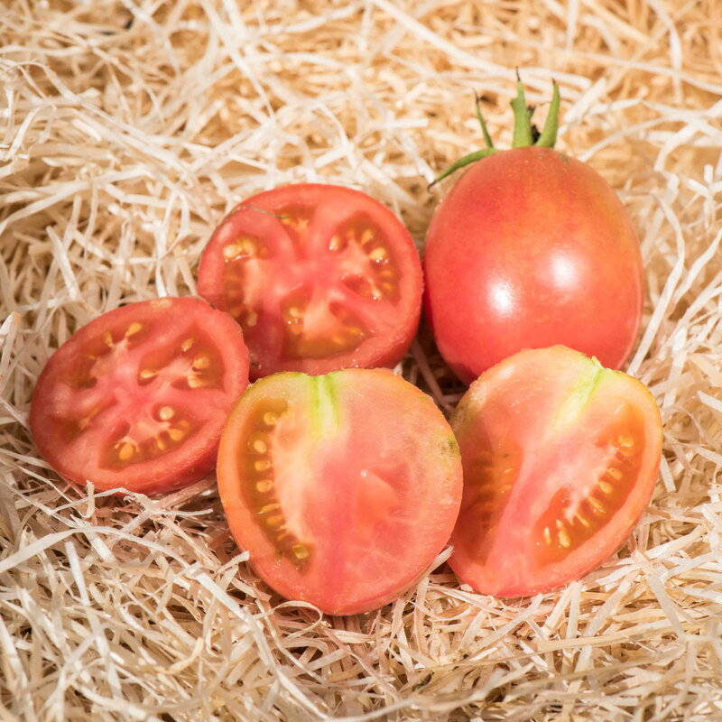 Tomates - Momotaro Atarashii
