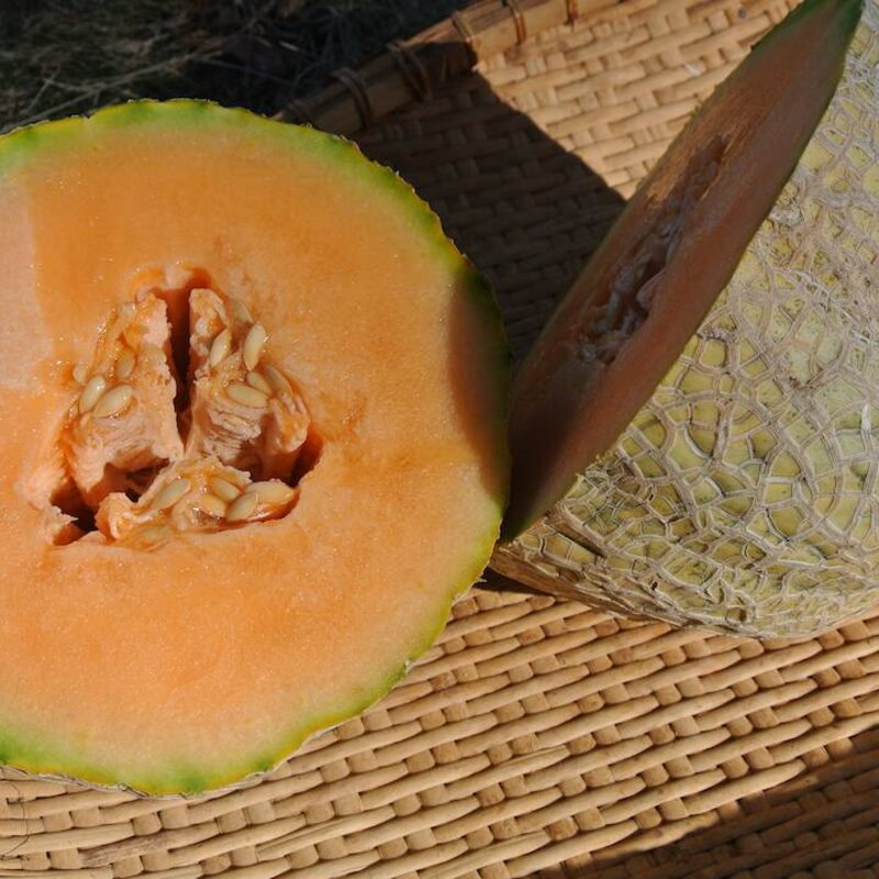Melons - Pike