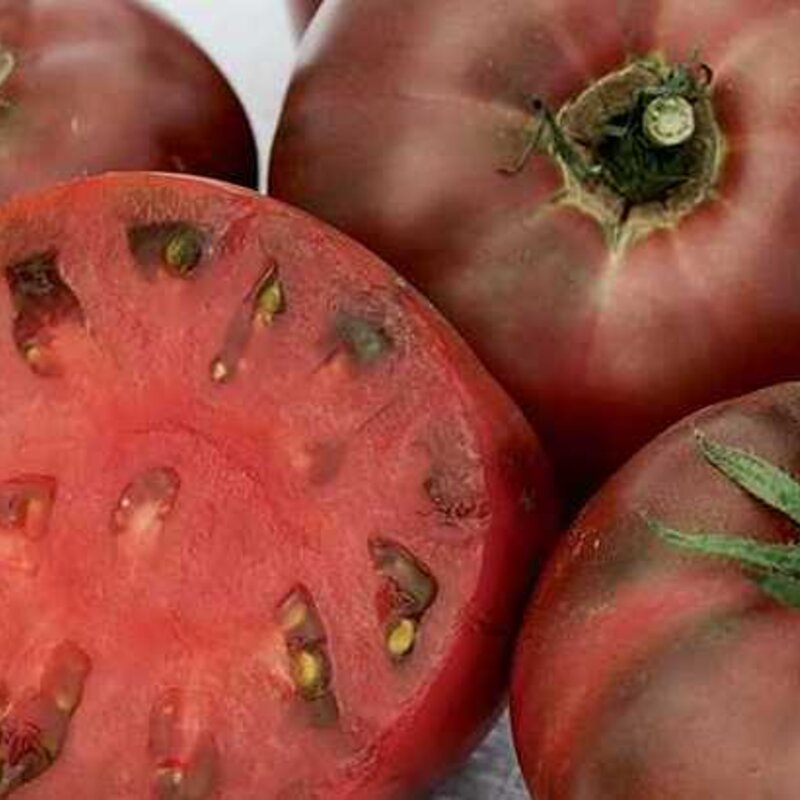 Tomates - Carbon