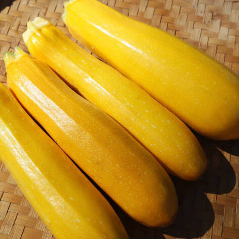 Courgettes - Rheinau Gold