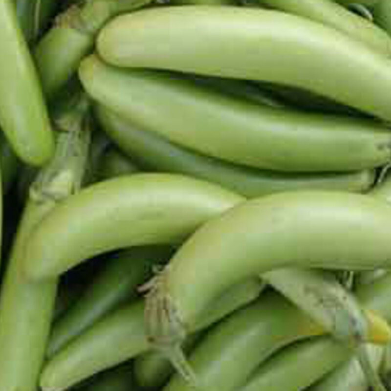 Aubergines - Thai Long Green