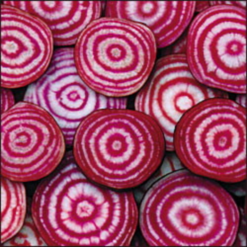 Betteraves - De Chioggia