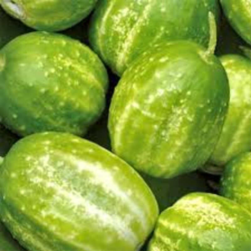 Concombres - Richmond Green Apple