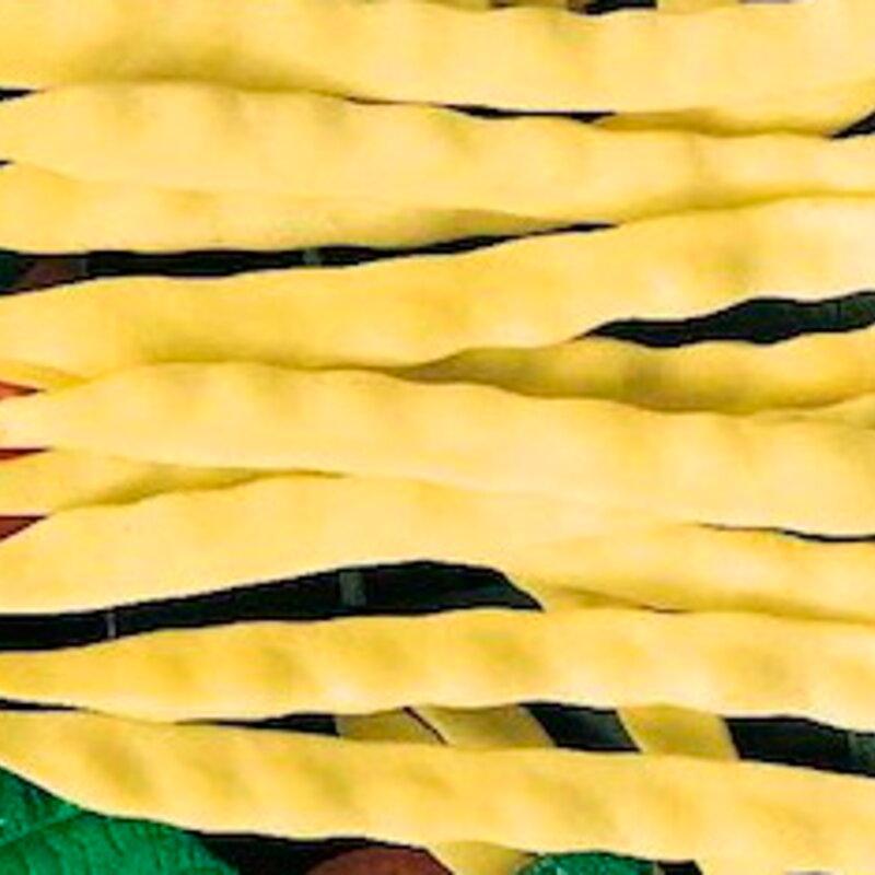 Haricots mangetout - Or du Rhin / Merveille de Venise