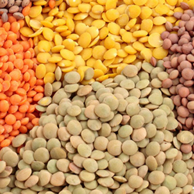 Lentilles - Multicolore
