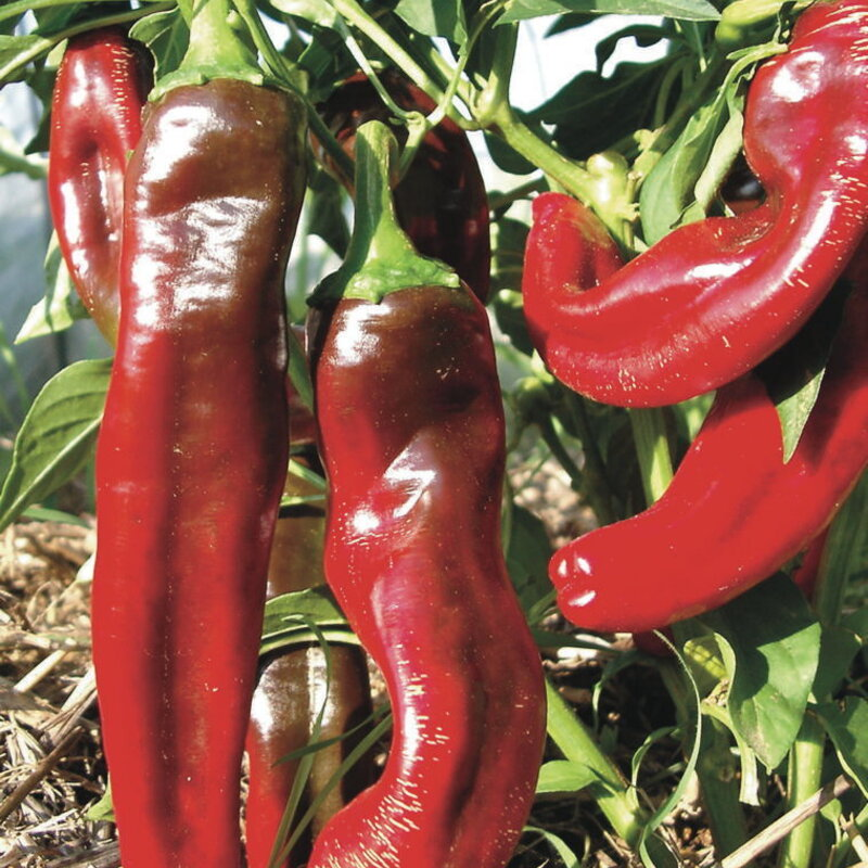 Piments/Poivrons - Boldog Hungarian Spice