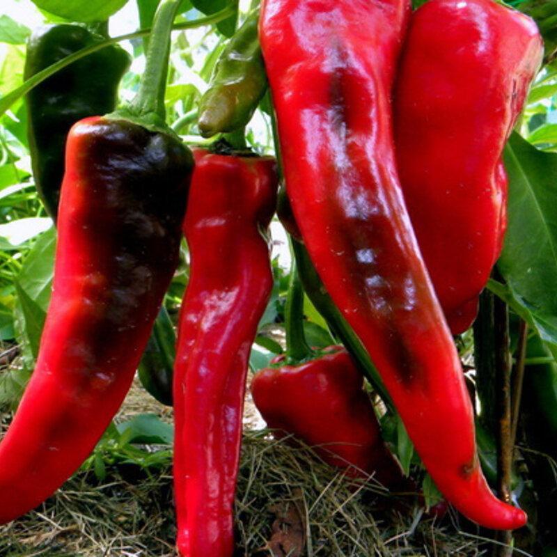 Piments/Poivrons - Chimayo