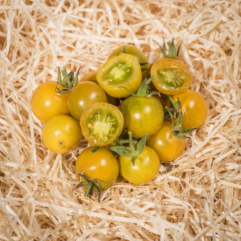 Tomates-Cerises - Bosque Green Cherry