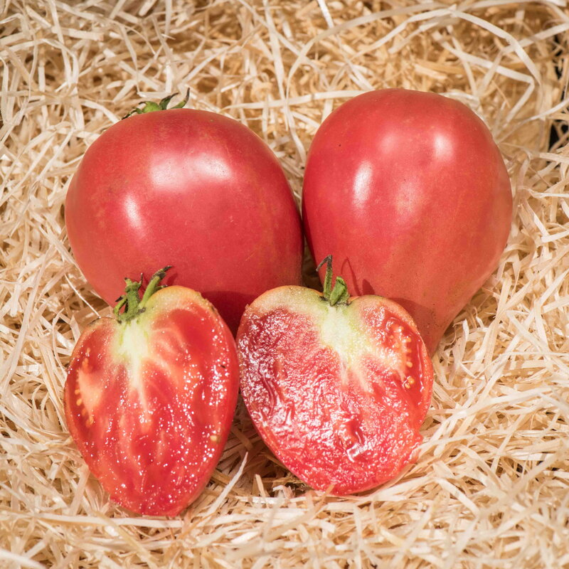 Tomates - Mazarini