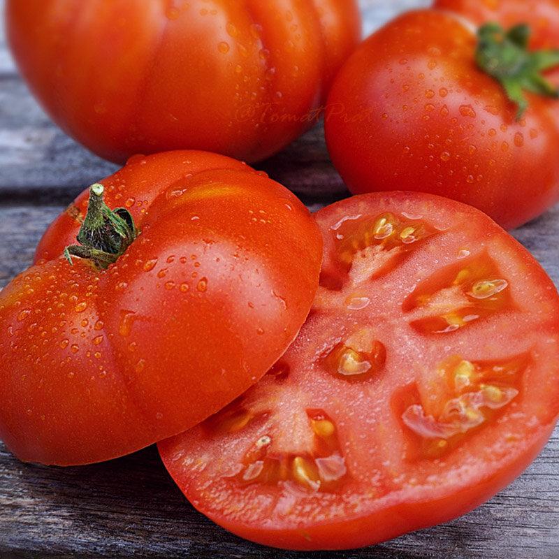 Tomates - Early Siberian / Sibirskiy Skorospelyi