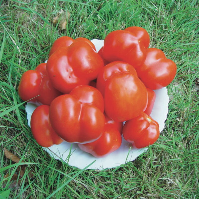 Tomates - Liberty Bell