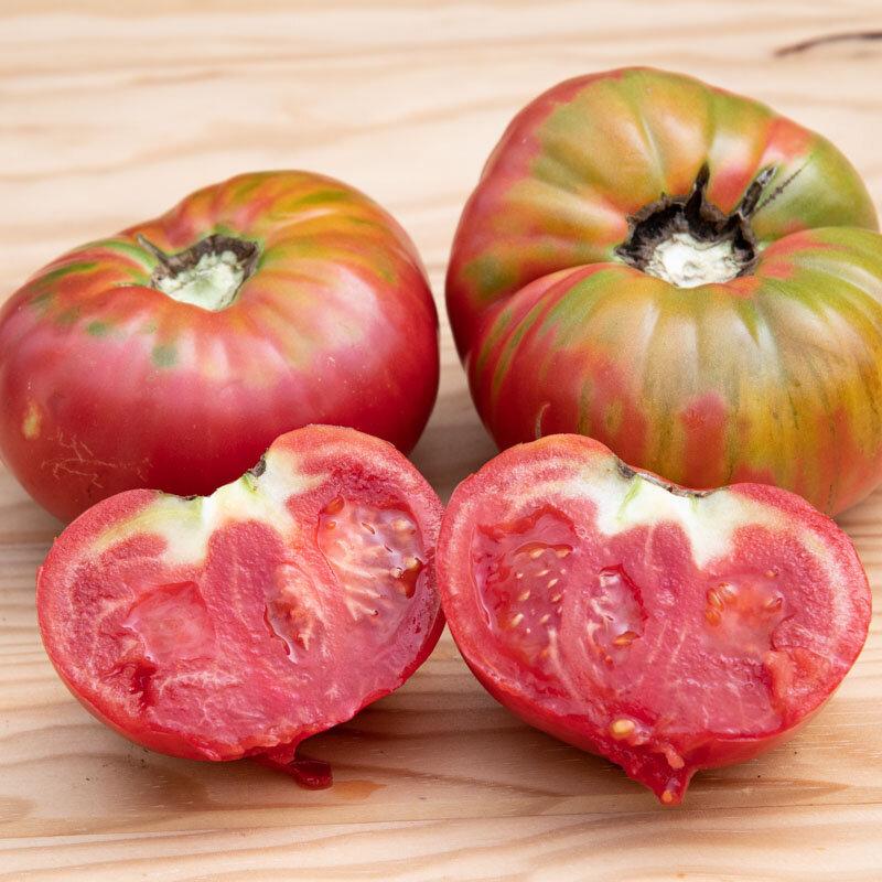 Tomates - Géante d'Orenbourg