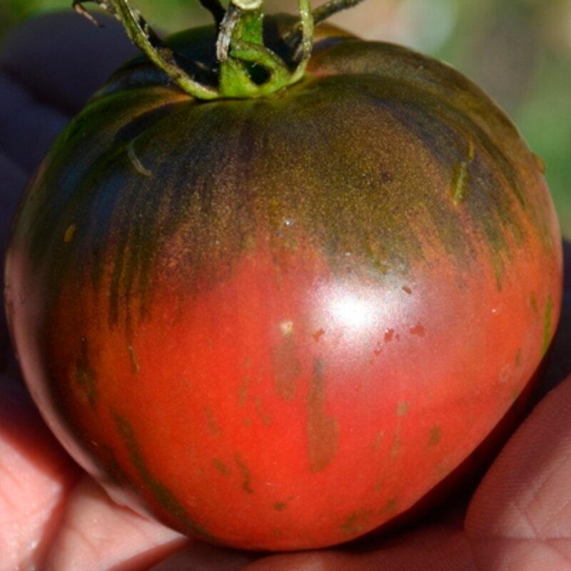 Tomates - Russian Cossack