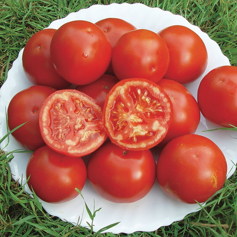Tomates - Siberian