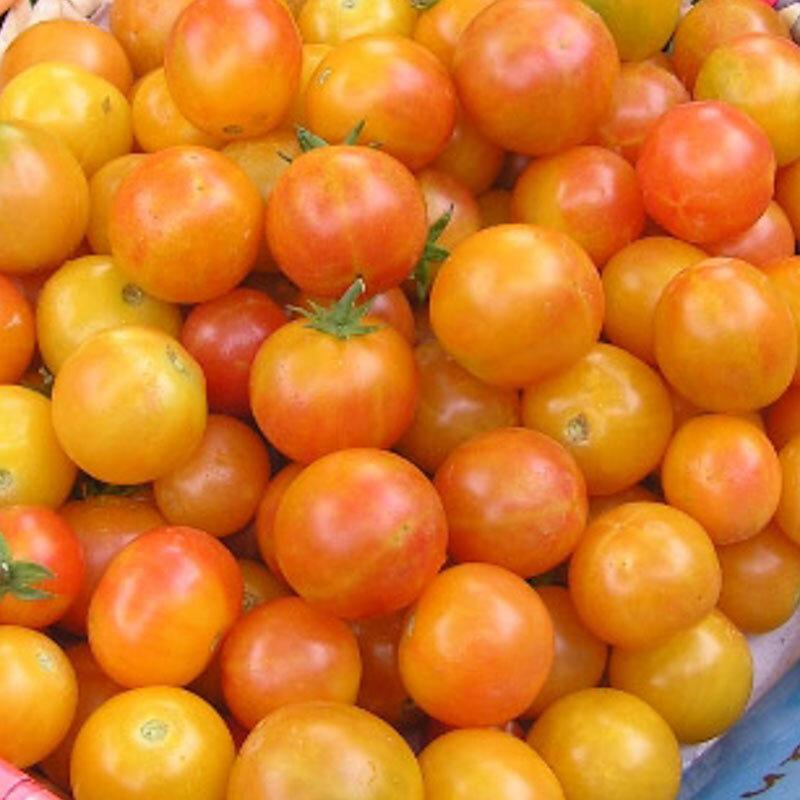 Tomates-Cerises - Jan's