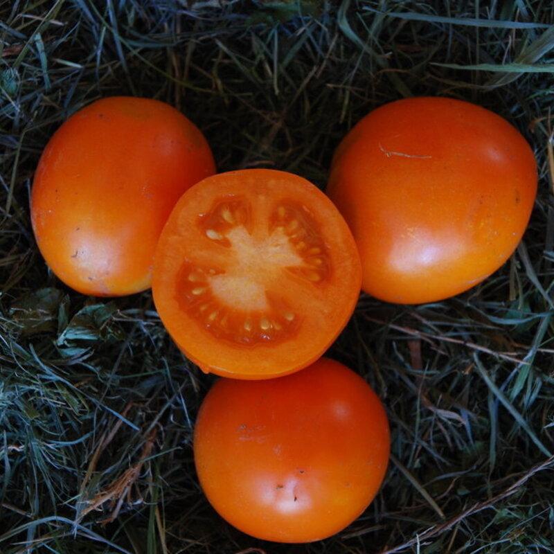Tomates-Cerises - Ida Gold