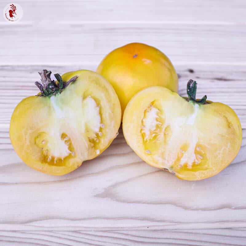 Tomates - Golden Jubilee