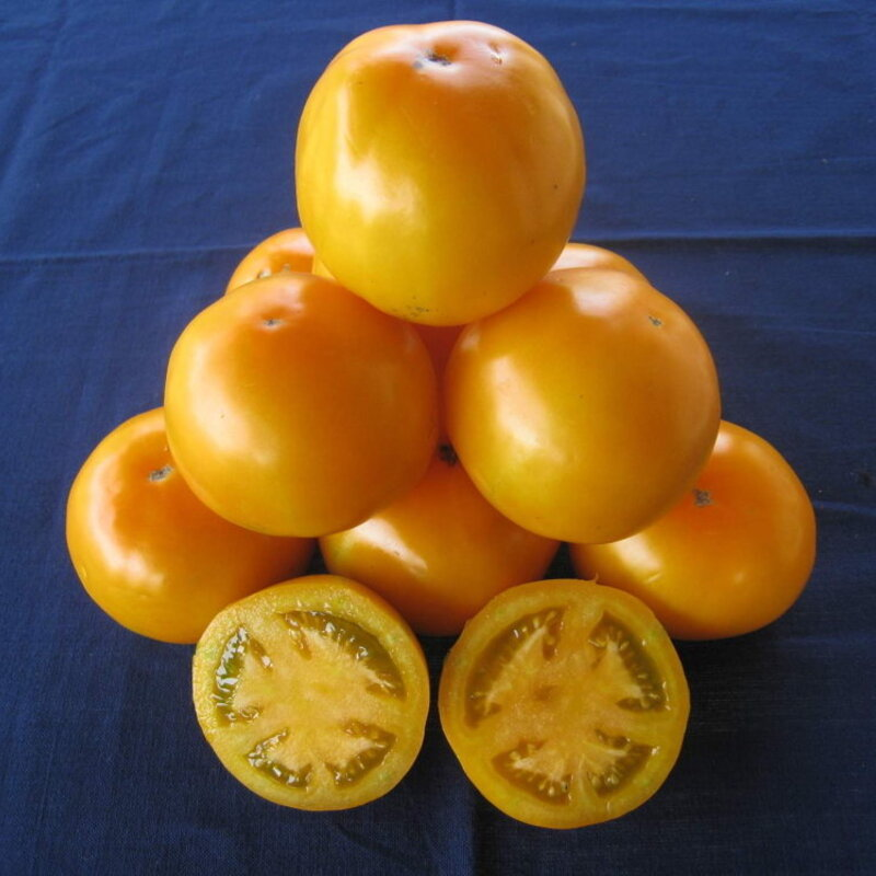 Tomates - Mountain Gold