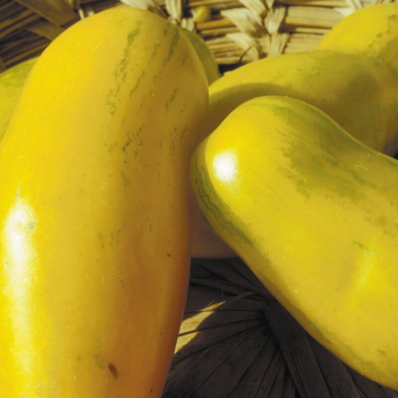 Tomates - Banana Legs