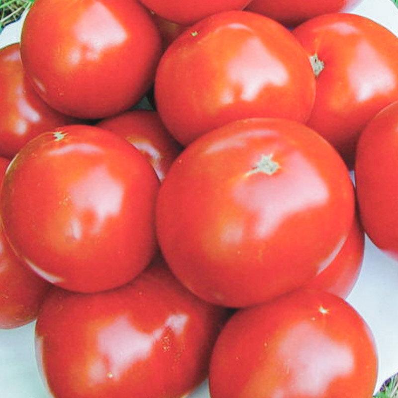 Tomates - Zarianka