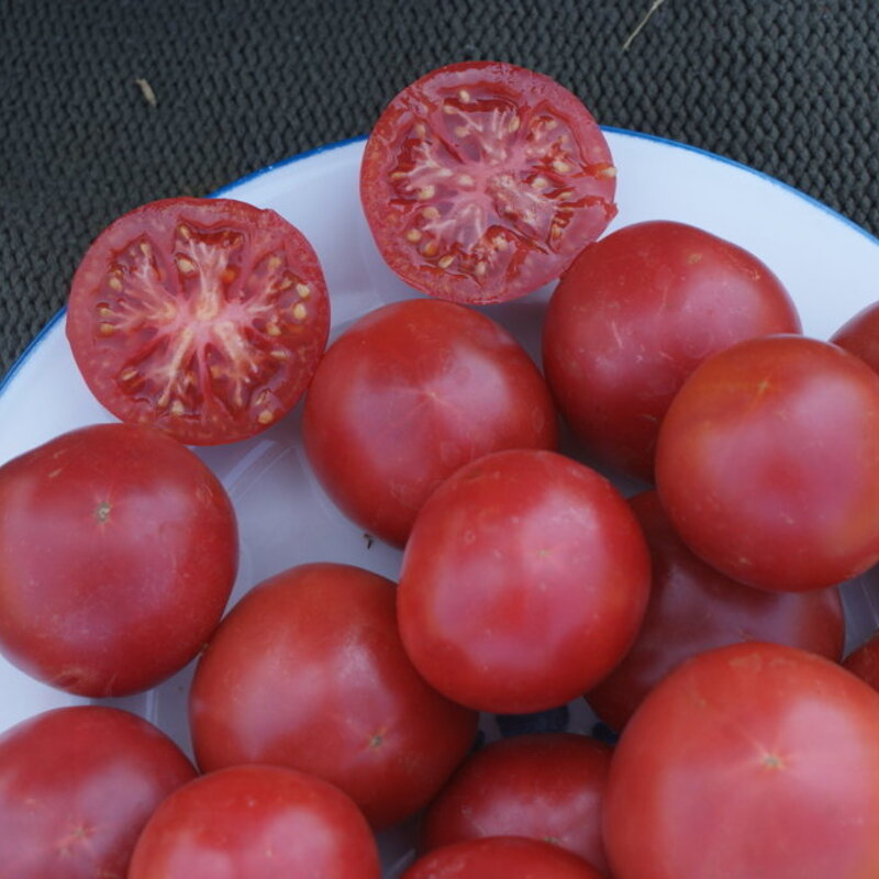 Tomates - Rose de Berne