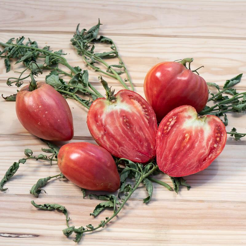 Tomates - Cœur de Bœuf Akers